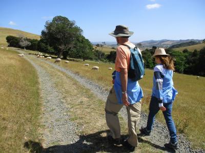 Hiking among the sheep